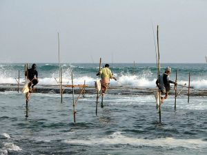 Sri Lanka's Stilt Fishermen